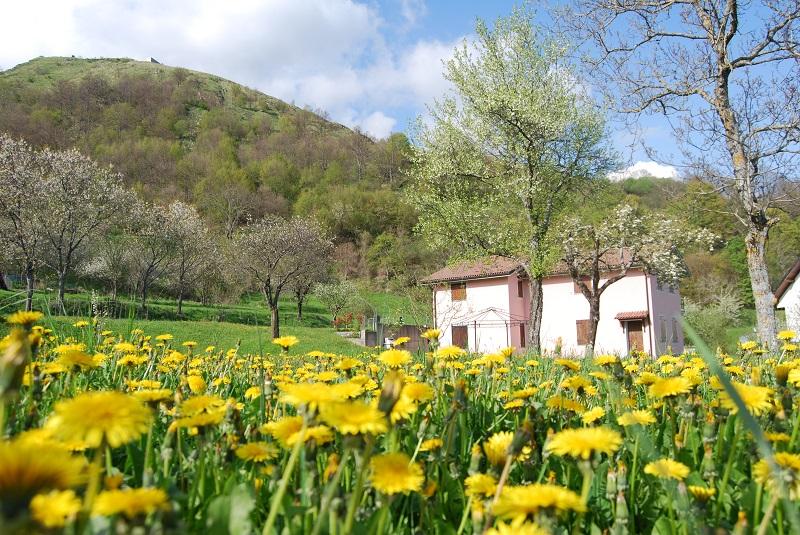 Val Trebbia, campo in fiore